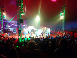 Der Ungarische Nationalzirkus in Balatonlelle